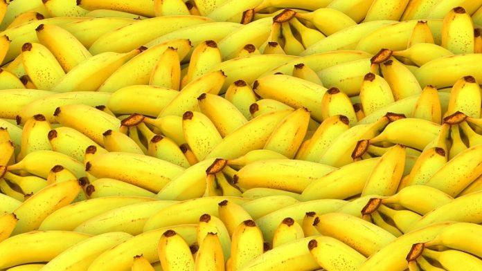 Manfaat Pisang, manfaat pisang ambon, manfaat pisang barangan, manfaat pisang kepok, manfaat pisang untuk ibu hamil, manfaat pisang raja, manfaat pisang rebus, manfaat pisang untuk pria, manfaat pisang untuk wanita, manfaat pisang ambon untuk pria, manfaat pisang ambon untuk asam lambung, manfaat pisang ambon lumut, manfaat pisang ambon untuk ibu hamil, manfaat pisang adalah, manfaat pisang ambon hijau, manfaat pisang ambon untuk bayi, manfaat pisang bagi tubuh, manfaat pisang bagi ibu hamil, manfaat pisang bagi pencernaan, manfaat pisang barangan untuk asam lambung, manfaat pisang batu, manfaat pisang bagi wajah, manfaat pisang bagi pria, manfaat pisang cavendish, manfaat pisang campur susu, manfaat pisang coklat, manfaat pisang campur madu, manfaat pisang campur bawang putih dan madu, manfaat pisang cavendish untuk kesehatan, manfaat pisang cavendish untuk bayi, manfaat pisang campur kurma, manfaat pisang dan madu, manfaat pisang di pagi hari, manfaat pisang dan madu untuk wajah, manfaat pisang dan alpukat, manfaat pisang di rebus, manfaat pisang dan kandungannya, manfaat pisang dan pepaya, manfaat pisang emas, manfaat pisang emas untuk kesuburan, manfaat pisang emas untuk kecantikan, manfaat pisang emas untuk ibu hamil, manfaat pisang emas untuk bayi, manfaat pisang epe, manfaat pisang emas untuk wajah, manfaat pisang emas asli, manfaat fermentasi pisang, manfaat fermentasi pisang klutuk, manfaat facial pisang, manfaat pisang untuk fitnes, manfaat biji pisang pidak, khasiat fosil pisang, manfaat pisang abaka dari filipina, manfaat pisang ambon untuk fitnes, manfaat pisang goreng, manfaat pisang genderuwo, manfaat pisang goreng untuk ibu hamil, manfaat pisang gembor, manfaat pisang goroho, manfaat pisang gedah, manfaat pisang gapi, manfaat pisang hijau, manfaat pisang hijau untuk asam lambung, manfaat pisang hijau matang, manfaat pisang hijau untuk ibu hamil, manfaat pisang hijau untuk diet, manfaat pisang hutan, manfaat pisang hijau untuk pria, manfaat pisang hij